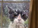 """13. """"Laissez-moi entrer. Tout de suite !"""""""