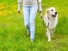La promenade doit être un moment de plaisir et de partage