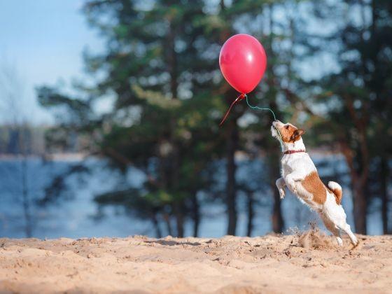 chien joue court ballon