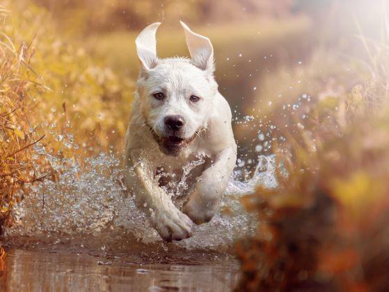 chien court eau rivière