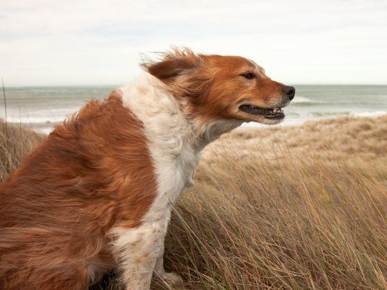 chien vent plage