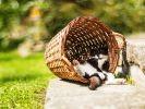 chat dort panier soleil