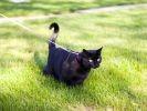 chat laisse jardin