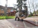 chat laisse peur