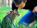chat laisse calins