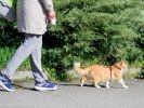 promenade laisse chat dehors
