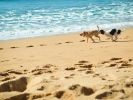 chiens courant plage