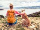 chien cani-rando