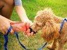 chien boit eau gourde