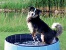 Piscine pour chien Trixie
