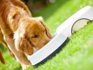 chien défenses immunitaires alimentation