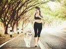 chien husky canicross