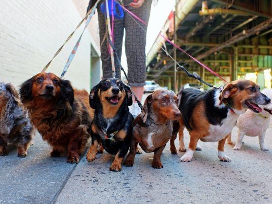 chiens dogsitter