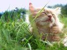 chat dort dans l'herbe