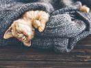chat dort dans couverture