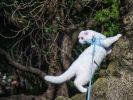 chat laisse arbre