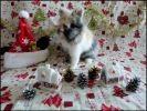 photo lapine décor noel creche