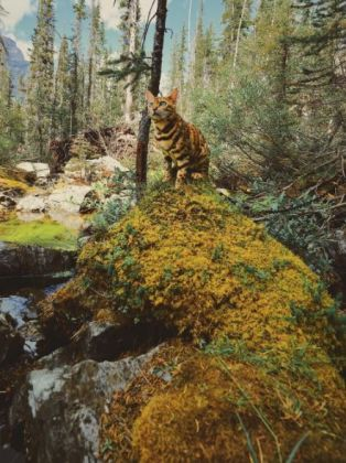 Suki dans la forêt