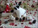 photo lapin noir et blanc décor noel