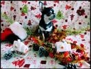 photo chien chihuahua noel