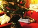 photo chien sapin noel