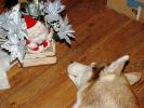 photo chien husky pere noel