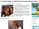 chien patrick torture cause animale