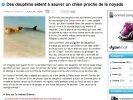 dauphins sauvent chien noyade