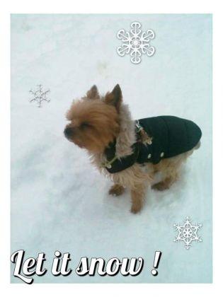 chien neige york