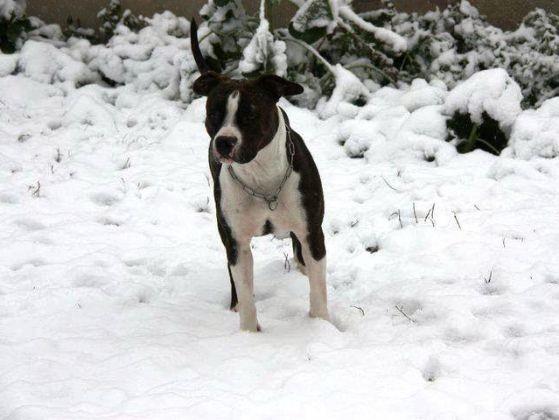 chien neige staff