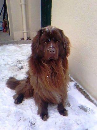 chien terre neuve neige