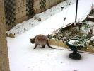 chat siamois neige jardin