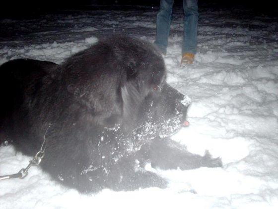 chien terre neuve jardin neige