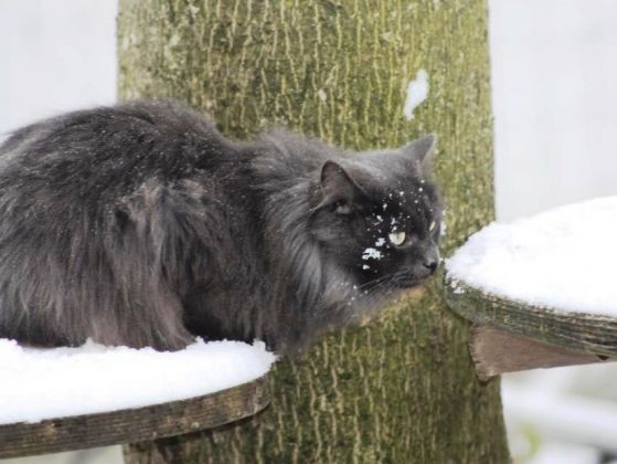 chat neige arbre