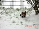 chien yorkshire jardin neige