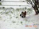 chien yorkshire jardin neige