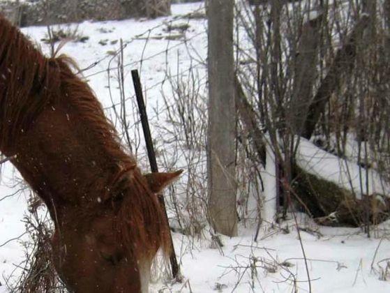 chien yorkshire cheval neige