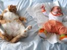 chat dort avec bébé