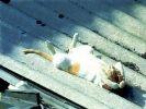 chat dort toit soleil