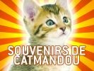 chat à katmandou