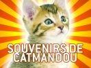 chat à katmandou