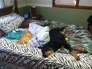 chat dort comme chien