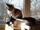 chats sieste fenetre soleil