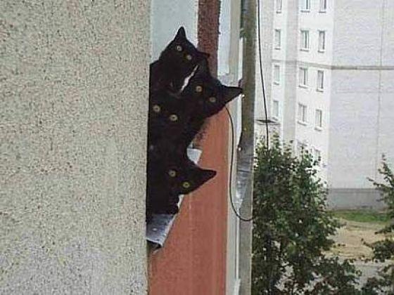 4 chats noirs fenetre