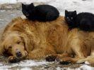 chats sieste sur chien
