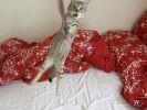 chat joue ficelle