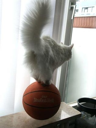 chat equilibre ballon