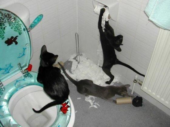 chats betise papier toilette
