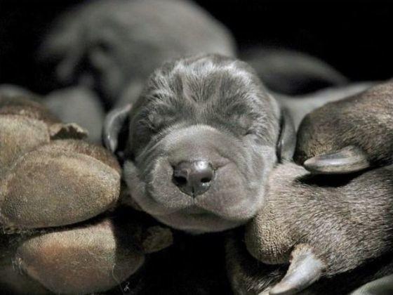 chiot sieste pattes mère