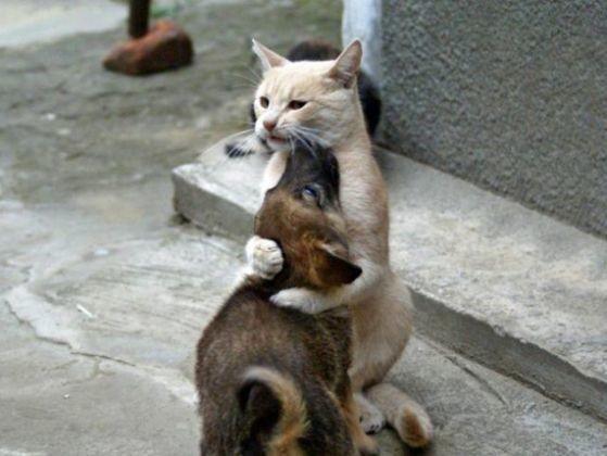 chat prend chiot pattes